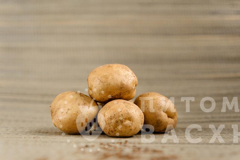 коренево купить семена картофеля в розницу